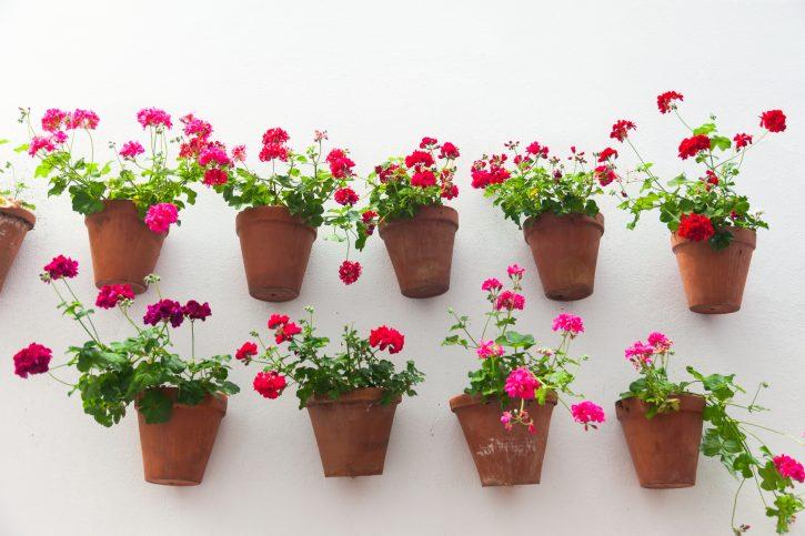 Reembolsos de primavera privicompras