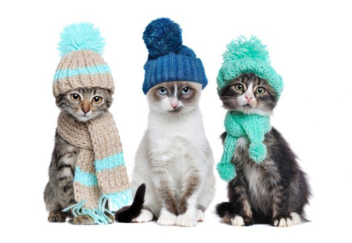 Cómo elegir los mejores accesorios para tu mascota