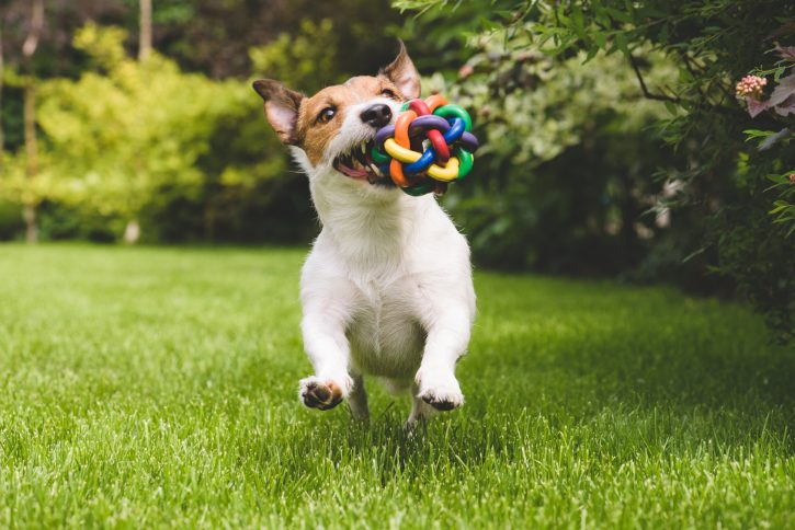 Los mejores accesorios para tu mascota con Privilegios en Compras