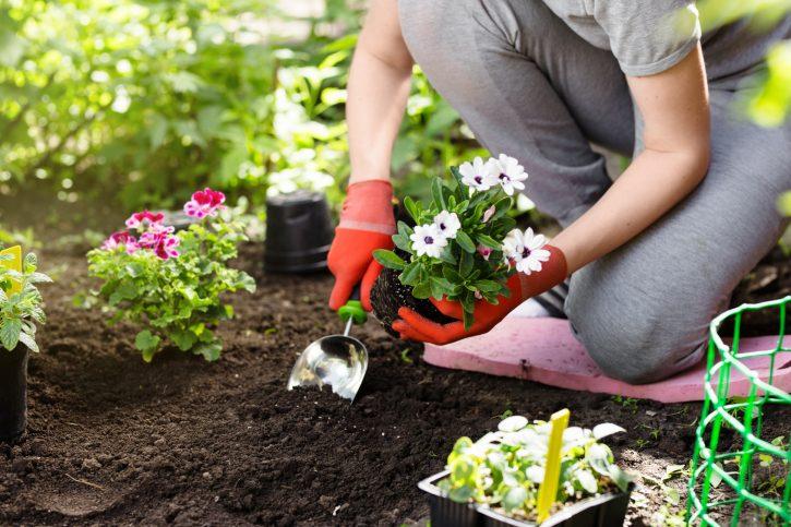 Descubre tu pasión por la jardinería con Privilegios en Compras