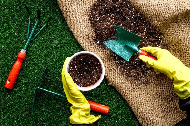 Disfruta de los efectos saludables de la jardinería con Privicompras