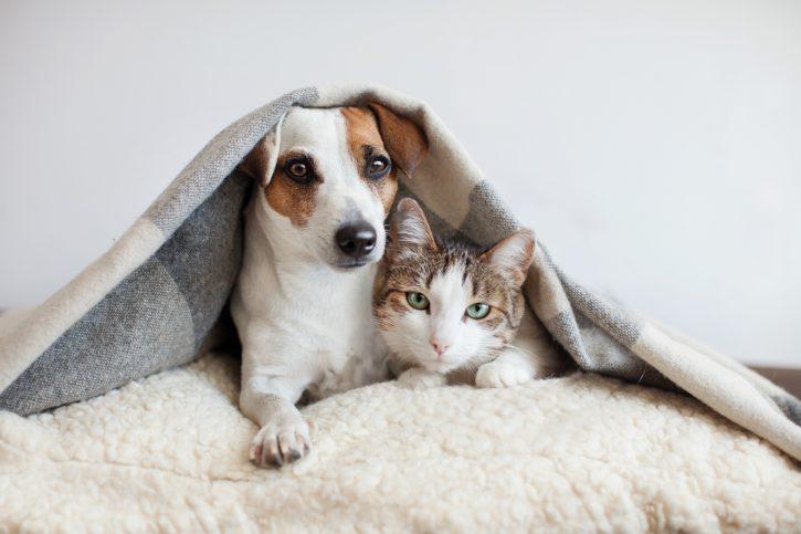Extrema el cuidado de tus mascotas durante este invierno con Privicompras